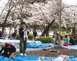 setting up in Tsuruma Koen
