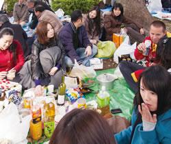 A couchsurfer sakura gathering Nagoya