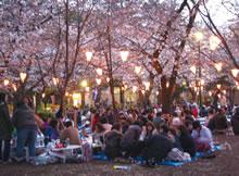 A couchsurfer sakura gathering Kyoto