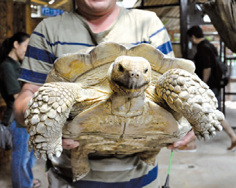 こちらは亀のアレックス。約7才で体重約80kg。寿命は150才くらい。