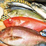 【KL】魚勝 : RM50の食事券