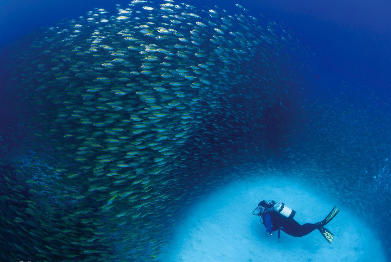 The Diver's Den
