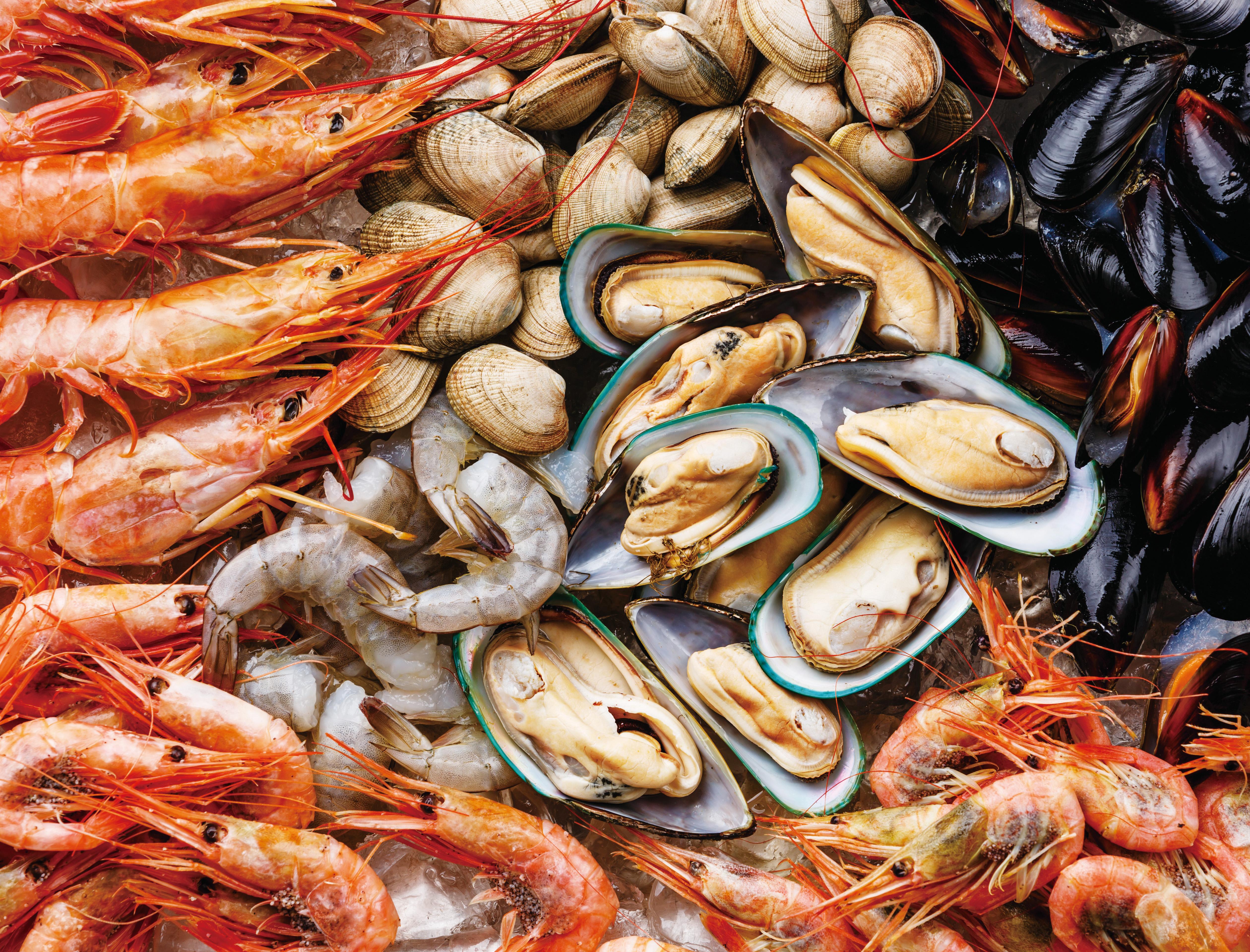 Seafood Maestro